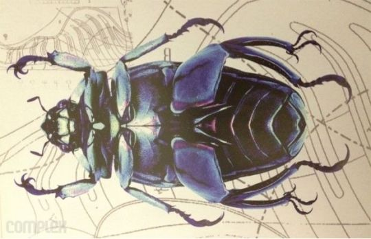 beetle_470613
